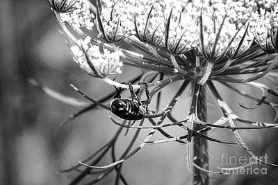 Photograph - The Beetle Acrobat Black And White by Sharon McConnell