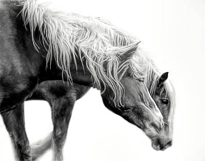 Photograph - The Belgian Horse In Monochrome by David and Carol Kelly