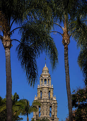 Photograph - The Bell Tower Palms by Laddie Halupa