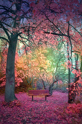 Summerland Photograph - The Bench That Dreams by Tara Turner