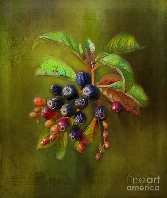 Photograph - The Berries by Judi Bagwell