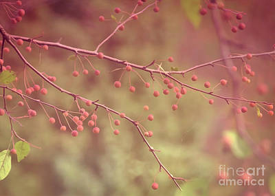 Photograph - The Berry Branch by Janice Rae Pariza