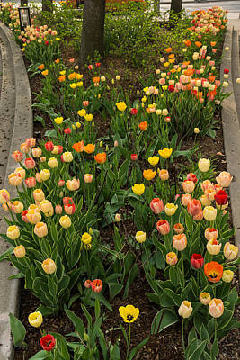 Photograph - The Best Traffic Island In Town - Enjoying The Beauty Of Spring by Georgia Mizuleva