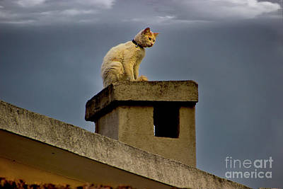 Photograph - The Best Vantage Point by Al Bourassa