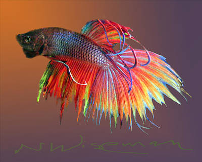 Siamese Fighting Fish Mixed Media - The Betta by Neal Wiseman