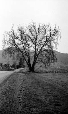 Photograph - The Big Beautiful Tree by Teri Schuster