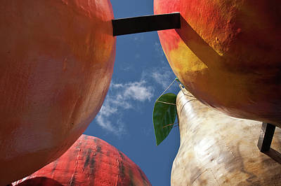 Photograph - The Big Fruit by Odille Esmonde-Morgan