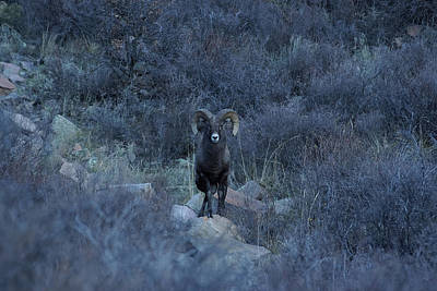 Photograph - The Big Horn 7 by Ernie Echols