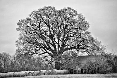Art Print featuring the photograph The Big Tree by Ron Dubin
