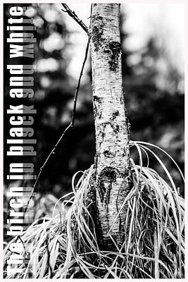Lush Mixed Media - The Birch In Black And White by Tommytechno Sweden