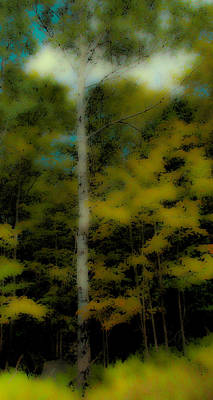 Digital Art - The Birch On Maple Ridge by David Patterson