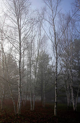 Photograph - The Birches by Debbie Oppermann