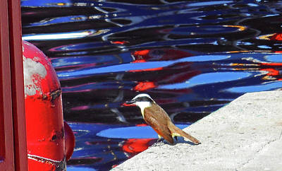 Photograph - The Bird 1 by Ron Kandt