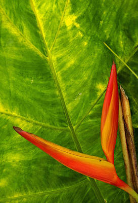 Photograph - The Bird Of Paradise by Doug Davidson