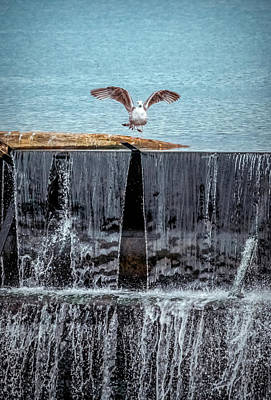 Photograph - The Bird Over Waterfall by Lilia D