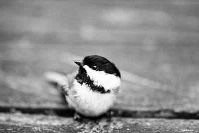Stephen White Photograph - The Bird by Stephen White