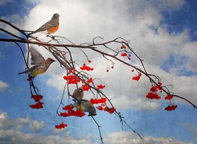 Photograph - The Bird Tree by Andrea Kollo