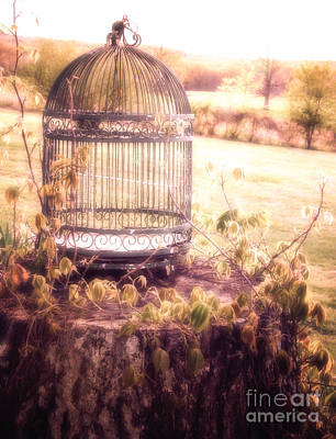 Photograph - The Birdcage by Julie Clements