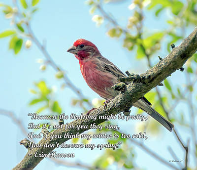 Finch Mixed Media - The Birdsong - Spring Quote by Brian Wallace