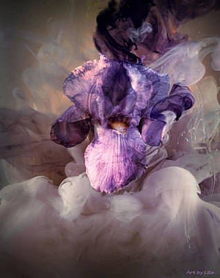 Iris Digital Art - The Birth Of The Iris by Lilia D