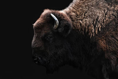 Bison Wall Art - Photograph - The Bison by Joachim G Pinkawa