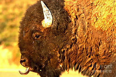 Photograph - The Bison Tongue by Adam Jewell