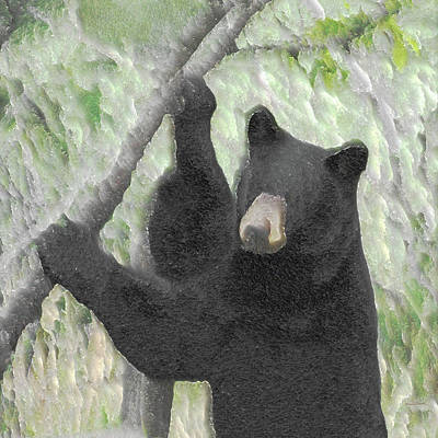 Photograph - The Black Bear by Ernie Echols