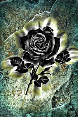 Digital Art - The Black Rose by Lisa Yount