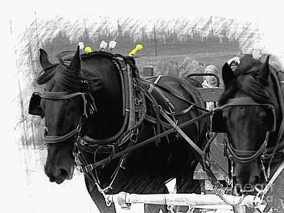 Photograph - The Black Team, Bar U Ranch II by Al Bourassa