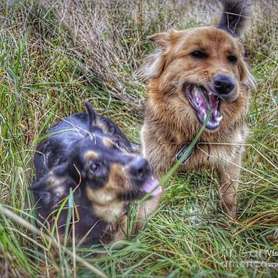 Photograph - The Blade Of Grass Lol  #dogs by Isabella F Abbie Shores