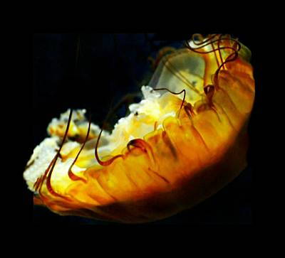 Photograph - The Blob by Diana Angstadt