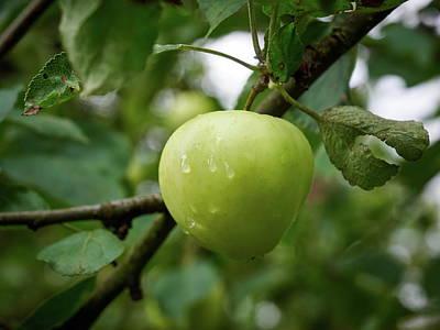 Photograph - The Blond Apple by Jouko Lehto