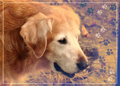 Retrievers Digital Art - The Blonde by Karen Beasley