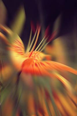 The Blossoming Lily 2 Art Print by Margarita Buslaeva