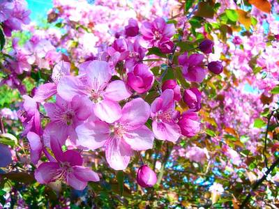 The Blossoms Of Spring Art Print