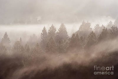 Pine Tree Photograph - The Blow Of The Forest by Yuri Santin