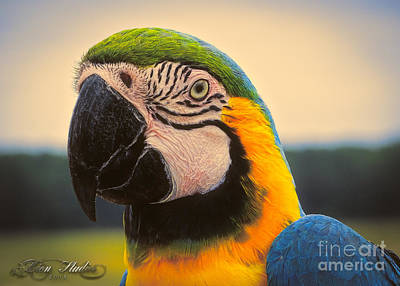 Photograph - The Blue And Gold Macaw Ara Ararauna by Melissa Messick
