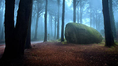 Photograph - The Blue Forest by Jorge Maia