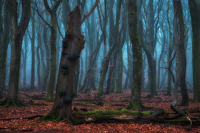 Netherlands Photograph - The Blue Forest by Martin Podt