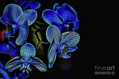 Photograph - The Blue Gathering by Diana Mary Sharpton