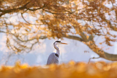 The Blue Heron And The Red Tree Art Print by Roeselien Raimond
