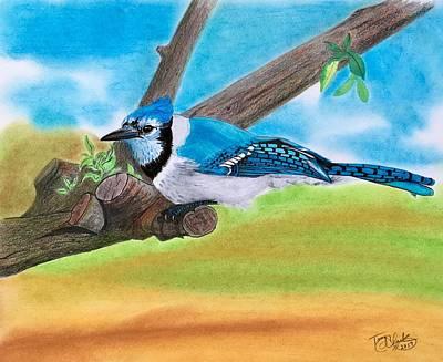 Drawing - The Blue Jay  by Tony Clark