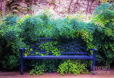 Photograph - The Blue Park Bench by D Davila