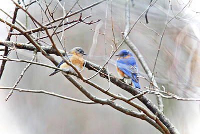 The Bluebirds Of Happiness Art Print by Mother Nature