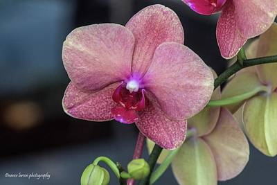 Photograph - The Blushing Orchid by Nance Larson