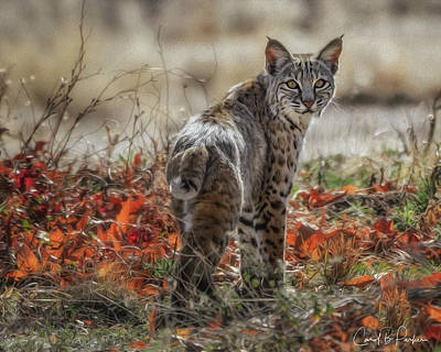 The Bobcat Original by Carol Brooks Parker