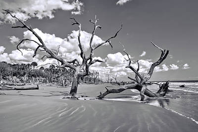 Dune Photograph - The Boneyard  by Marcia Colelli