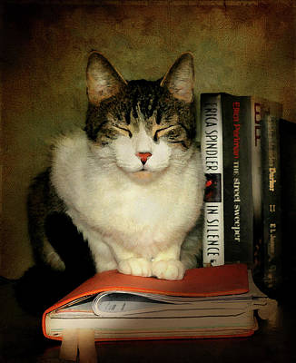 Gray Tabby Photograph - The Book End by Diana Angstadt