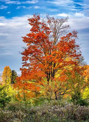 Fall Photograph - The Boss by Steve Harrington