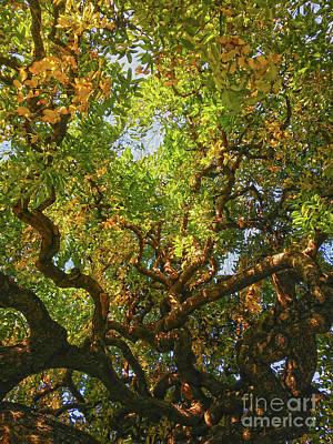 Photograph - The Botanical Garden Zagreb #9 by Jasna Dragun